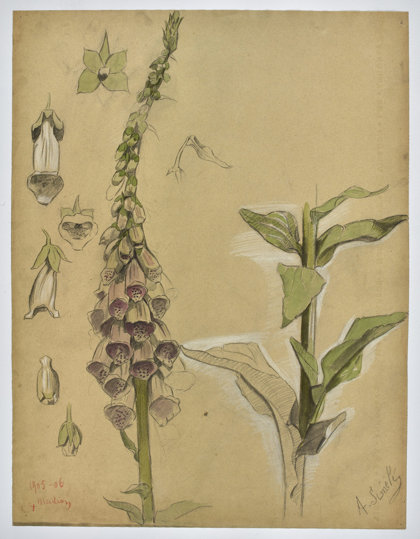 botanique